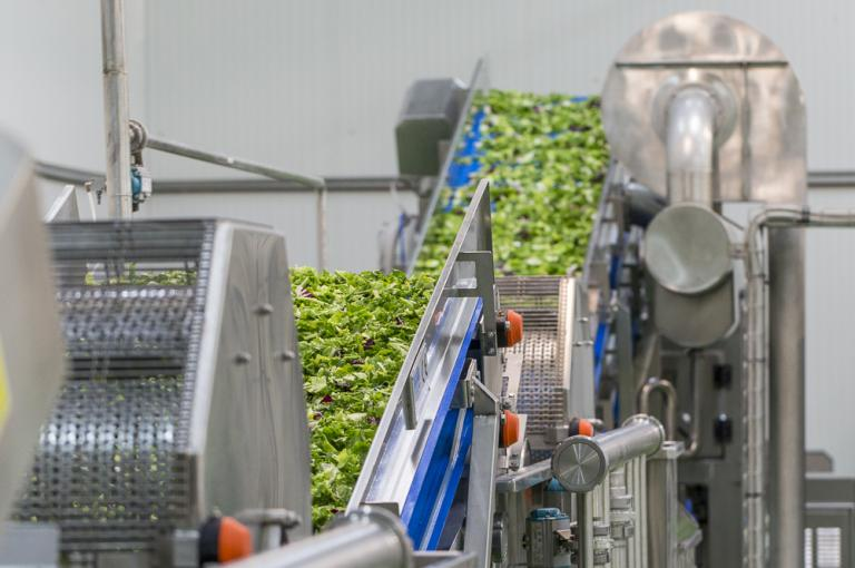 Vegetable processing company